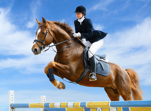 Zen And The Art Of The Equestrian Alphabet