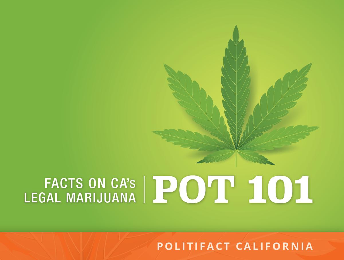 marijuana controversy